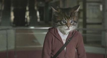 toyota-ninja-cats1.jpg